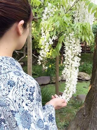 ☆着物でおでかけ☆風薫る初夏の奈良散歩2~萬葉植物園で藤鑑賞
