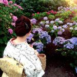 ☆着物でおでかけ☆三室戸寺の紫陽花ライトアップ