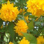 双子山 綺麗な山の花