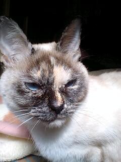 愛猫のブサショット(><)