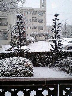 雪つもりました♪