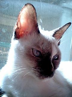 美ネコ!?
