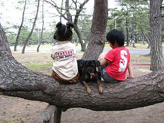 松と子供と犬の頭