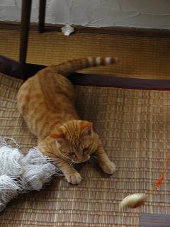 笑屋さん家の猫1