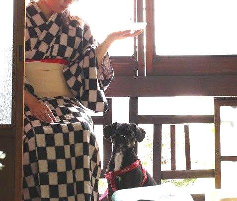 着物生活(犬と着物)
