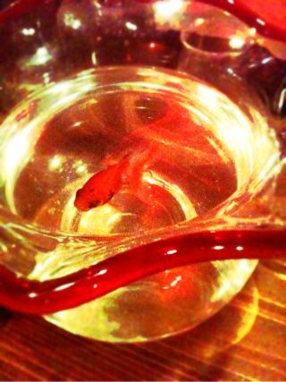 fc2blog_20121026212003a24.jpg
