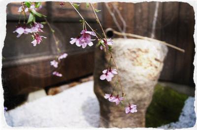harumusubi3.jpg